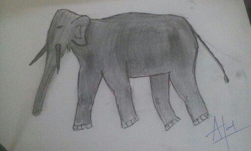 Asian elephant (Gajaraj of Napal)