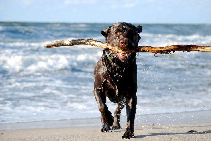 Poland, dog on the beach