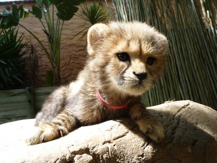 This little Tigerbaby, realy cute...