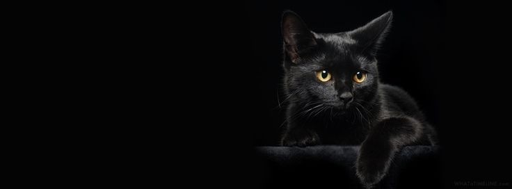 Cats Facebook Covers 2014 - Animals Facebook Timeline Cover Photos 2014