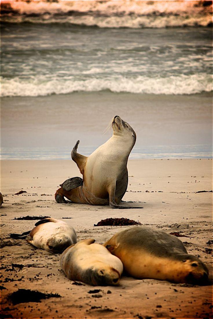SOOO CUTE !!!  Sea Lion on Near Seashore