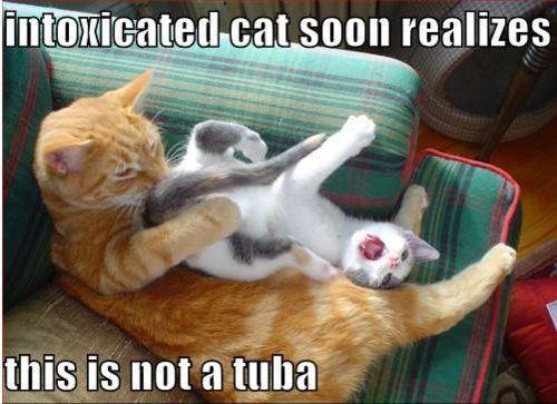 Funny Clean Memes: Arnold Schwarzenegger's Cat. It's Not A Tuba! . . . Ba Dum