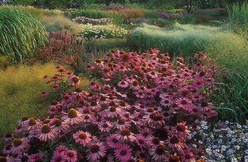 52 best lurie garden images on pinterest yard design for Piet oudolf favorite plants
