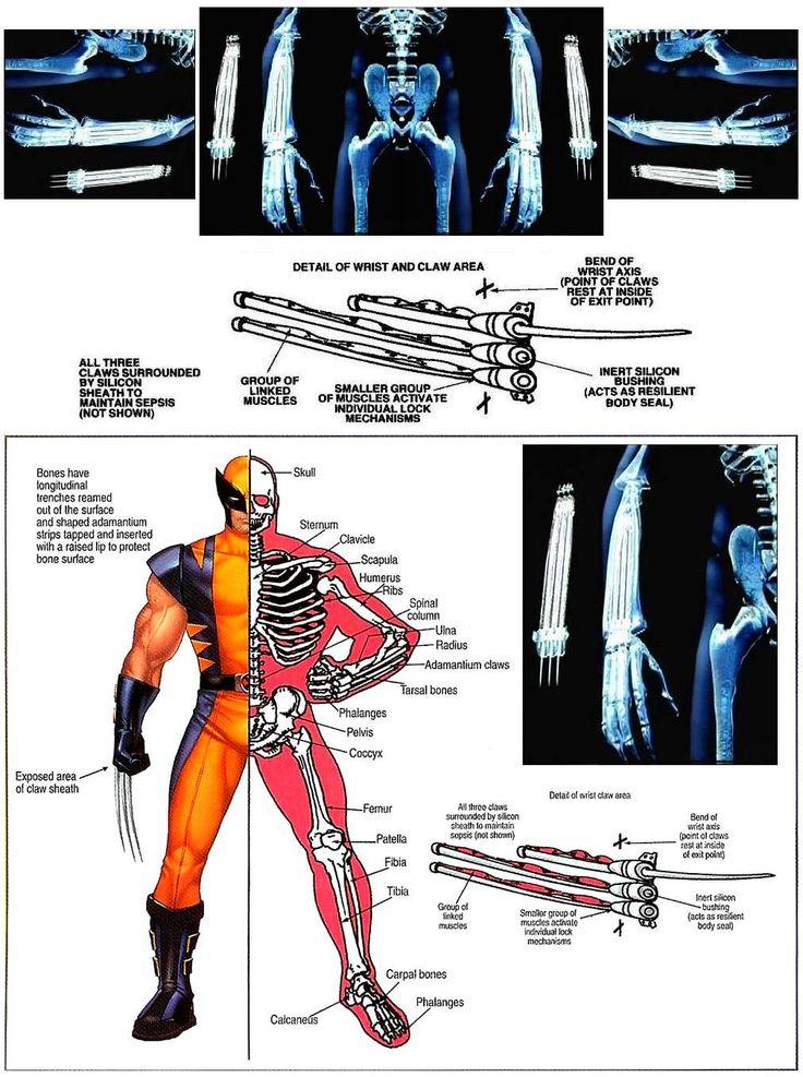 Wolverine's skeleton