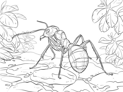 Good Red Wood Ant Coloring page