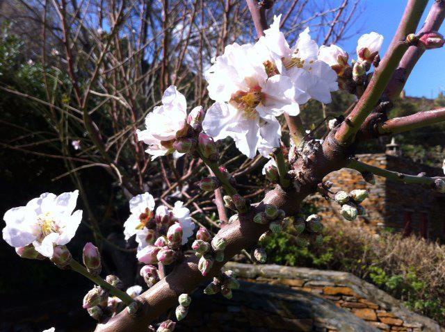 #Spring is in full swing on the #island!! #kea #tzia #greece