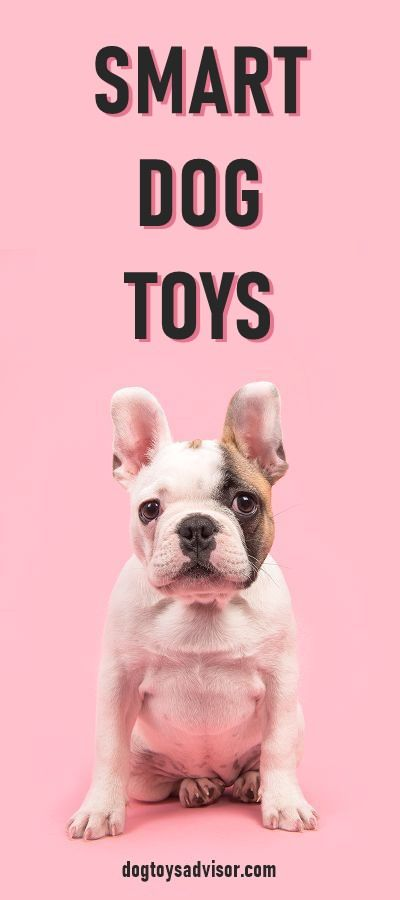 Is It Hard To Entertain Your Smart Dog Smart Dog Toys Are