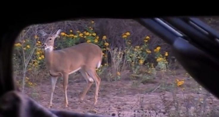 .410 shotgun slug take out a deer