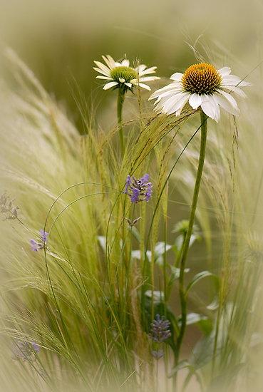 Summer Softness