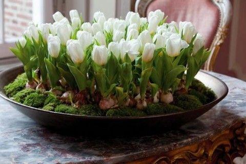 Букет тюльпанов можно вырастить без всякой оранжереи и к нужному вам сроку.Возьмите обычный цветочный горшок, наполните его любой землёй - тип грунта не важен. В этот грунт тюльпановые луковицы низко…