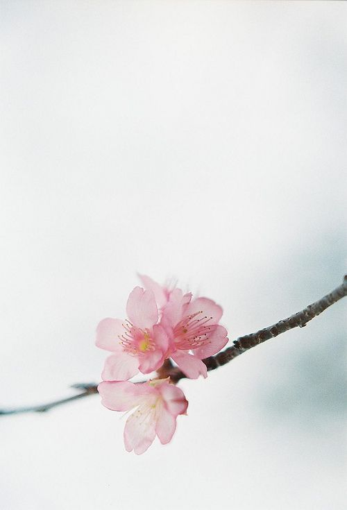 cherry tree muslim personals This pin was discovered by berta gazdag discover (and save) your own pins on pinterest.