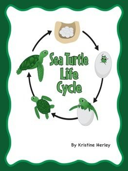 Sea Turtle Life Cycle:- A sea turtle life cycle ordering worksheet (circular).-A sea turtle life cycle stages worksheet (linear).-Sea turtle life cycle cards to cut and sequence (a set of colored, a set of black and white, and a set of word cards).-Five two-piece life cycle vocabulary card puzzles (match picture to word).-A trace the word page (eggs, break out, hatchling, juvenile, adult).-A label the parts of a sea turtle page; (has word cards to cut out) parts include: shell, head…
