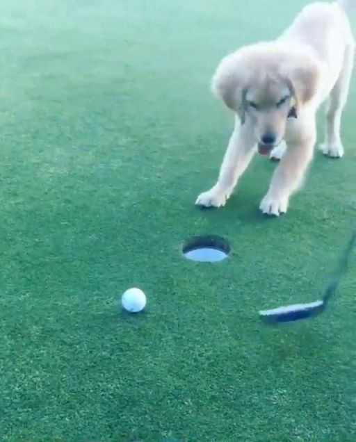 Hey, this ball is lost and it needs to be taken to its rightful place *put the ball to the hole* woof woof! I made it yeaayy!
