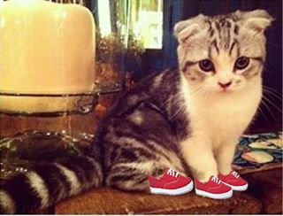 Meredith and her Red Keds!  This is adorable!  (: