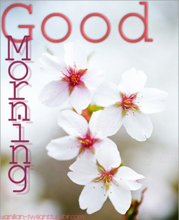 Good Morning Sunday Flowers Images : Best images about good morning with flowers on