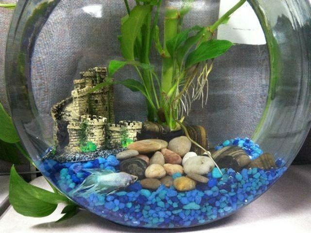 deko fur aquarium selber machen, aquarium deko selber machen – zuhause image ideas, Design ideen