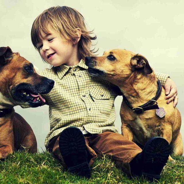 نصائح لمنع الكلاب من مضغ الأحذية والأثاث دليل العيادات البيطرية دكتور بيطري بين يديك Dogs And Kids Friends Wallpaper Hd Cute Animals With Funny Captions