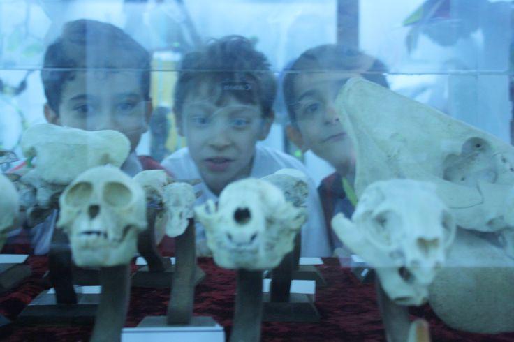 Anabilim Doğa Müzesi'nde Anabilim 2 C sınıfı, 16 Nisan Çarşamba günü Türkiye'nin ilk doldurulmuş hayvan müzesi olan Doğa Bilim Müzesi'ne gitti. Pendik'te bulunan müzede, içleri doldurulmuş ve mumyalanmış çeşitli türlerdeki 650 adet hayvan, 250'den fazla tür bulunmaktadır. Öğrenciler, bu kadar çok türü bir arada görmenin  kendilerini  çok mutlu ettiğini ve  buradan edindikleri bilgilerle kendi belgesellerini hazırlamak istediklerini dile getirdiler.