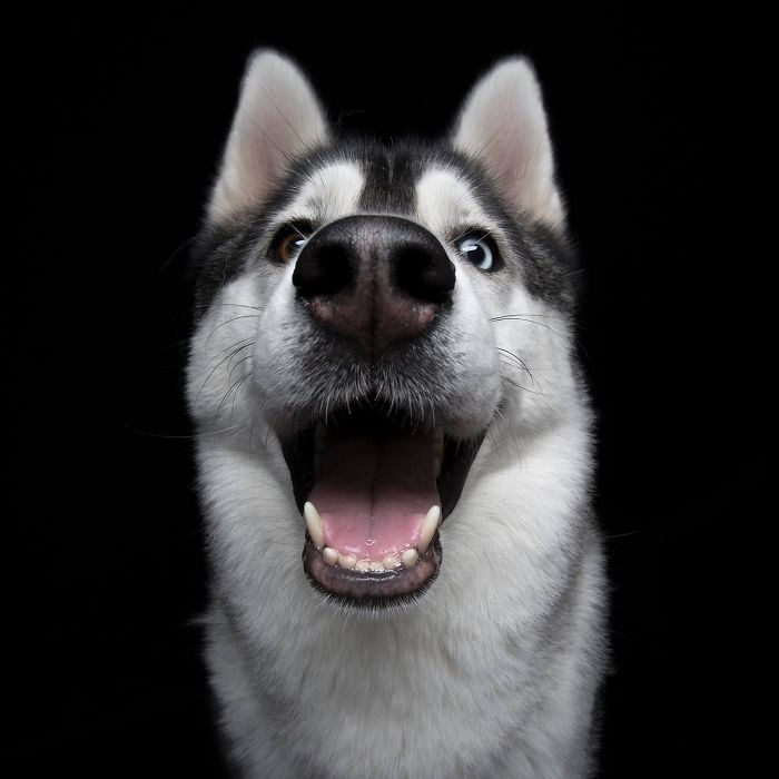 Cães Sorridentes