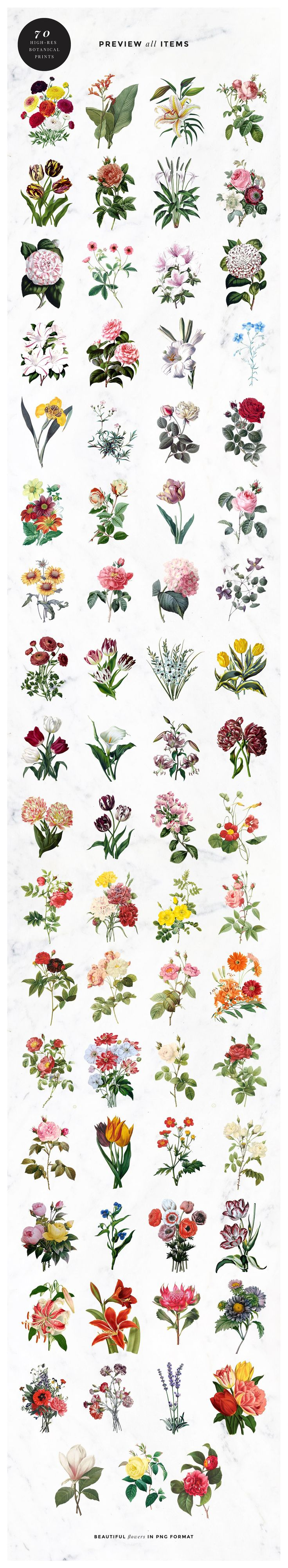Vintage Botanical Images Illustrations, Flower Types