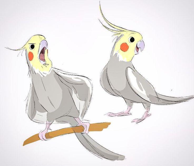 рисунки попугаев смешные слов мог