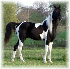 This reminds me of the model horse I had, that I called Warpaint.