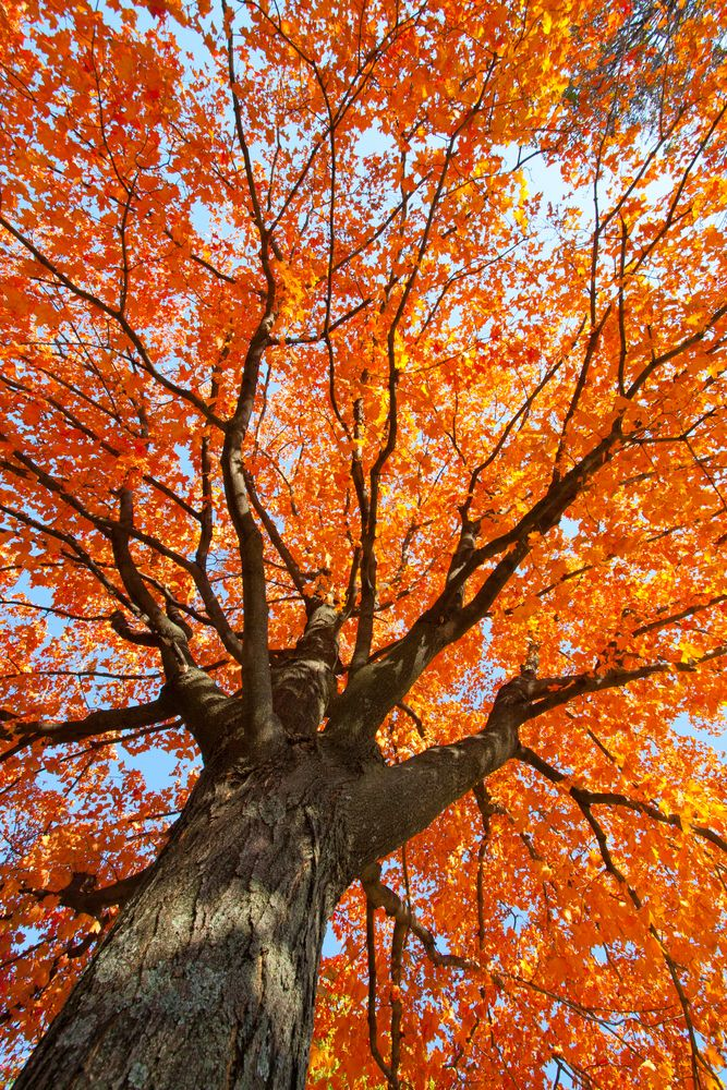 Autumn is right around the corner and the leaves are changing in New England. Check out our list of the best road trips to see the fall foliage in New England with your family and friends.