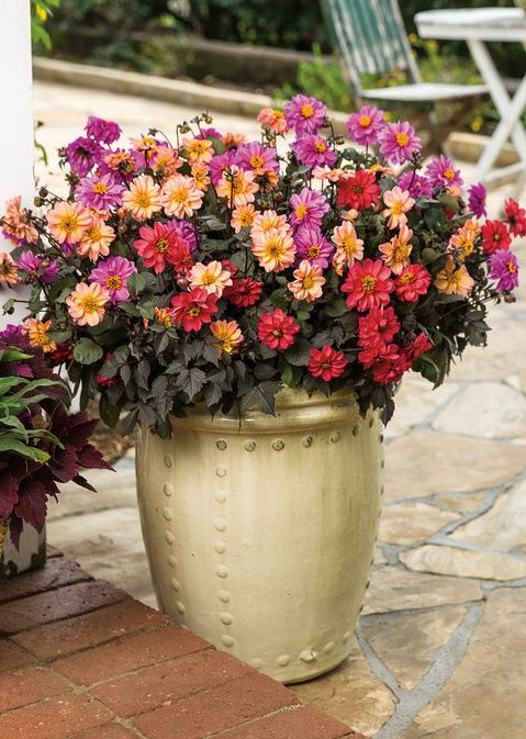u0027fairy tales come trueu0027 combines our three luscious dahlightful dahlias into one container of - Outdoor Flower Pots