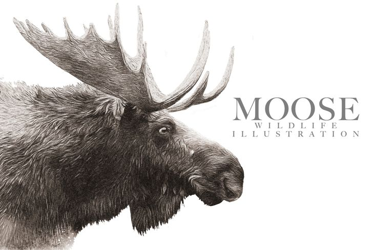 Moose Wildlife Illustration by Digital Art Downloads on Creative Market