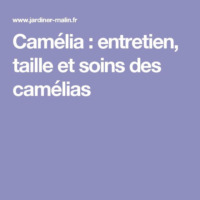 Camélia : entretien, taille et soins des camélias