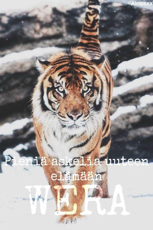 Tiikereillä on vielä toivoa. Sitä toivoo ainakin kuvan muokannut Ainoxxx.