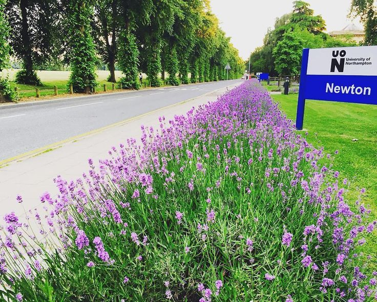 Lavender outside Newton