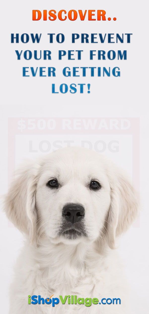 Best Lost Pet Locator Easiest Method To Find A Lost Dog Or Cat Losing A Dog Losing A Pet Pets