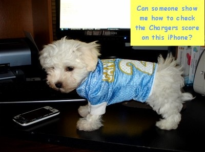 3d68cd298 ... PET DOG PREMIUM NFL JERSEY wNAME TAG ALL SIZES San Diego Chargers dog ( spawty) ...