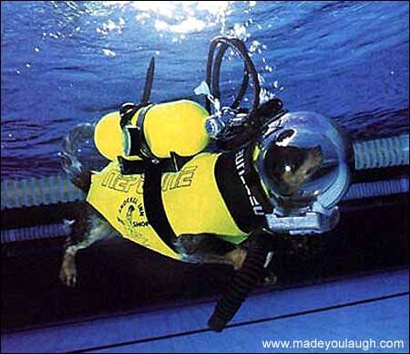 Wanna take your dog out diving?? via madeyoulaugh