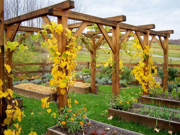 89 best grape arbor images on Pinterest Backyard ideas, Grape - garden arbor plans designs