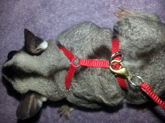 Sugar Glider Go-Harness by MobileCritters on Etsy