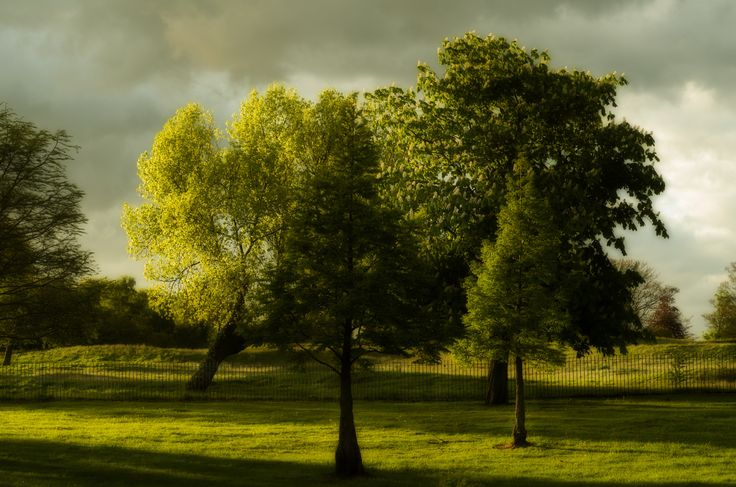 Trees in Buile Hill Park, Salford by Jakub Hajost on 500px