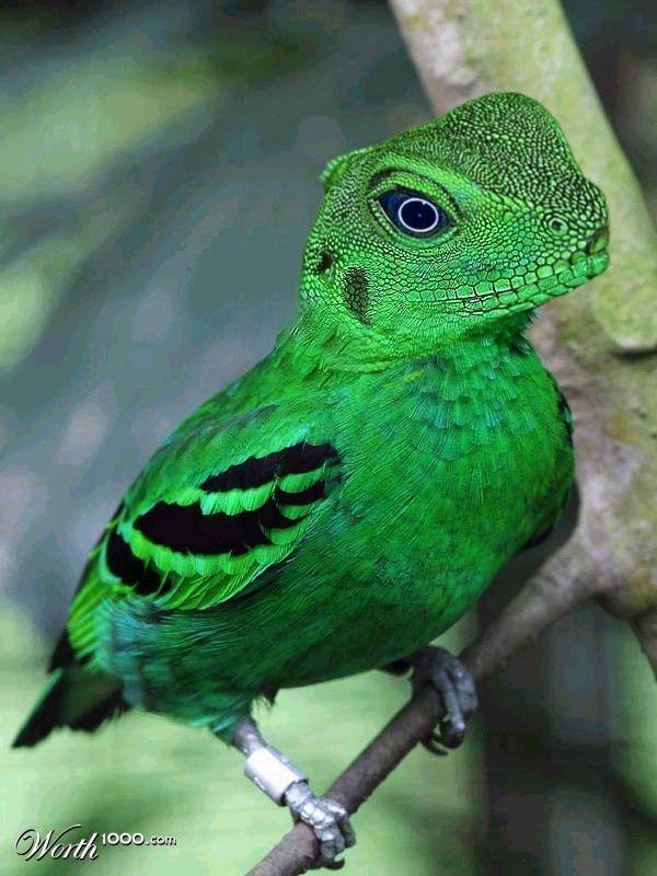 Hybrid Animals (Photomanipulations) on Pinterest | Photo ...