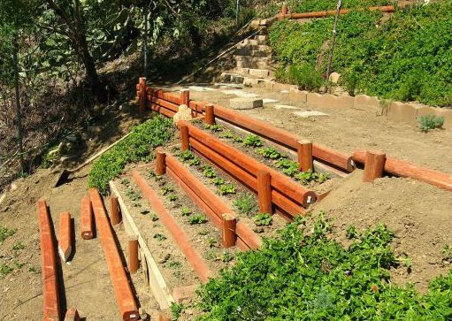 maybe a stepped garden is the best thing for our steep, rocky slope in the yard...