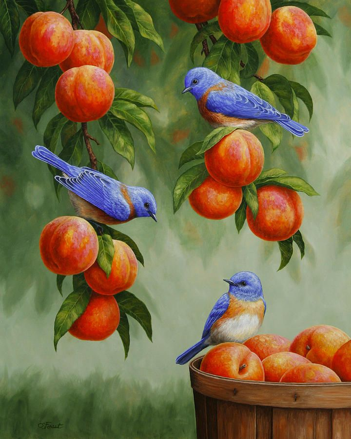 Bird Painting - Bluebirds And Peaches Painting