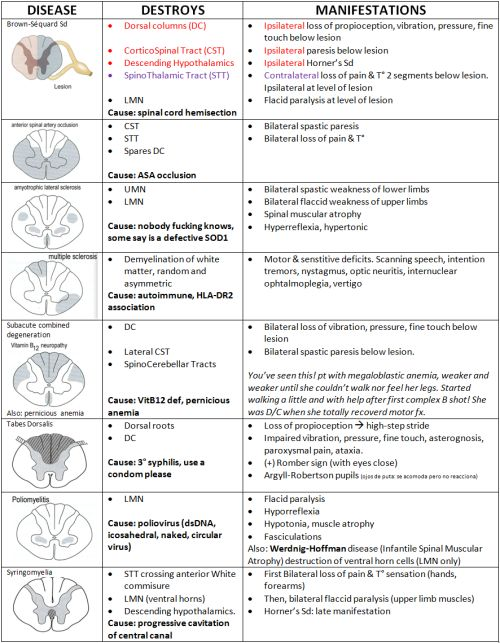 mynotes4usmle:  SPINAL CORD LESIONS