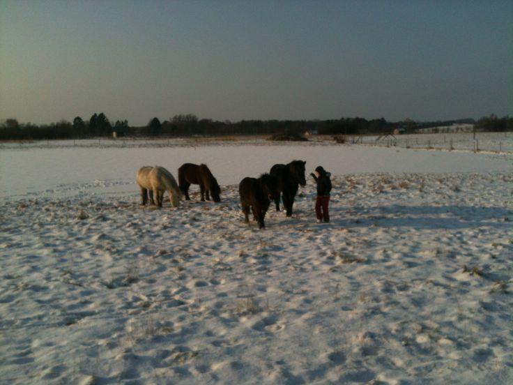 Sne og islandske heste hører til mine favoritter - her sammen med den yngste af mine favoritbørn :)