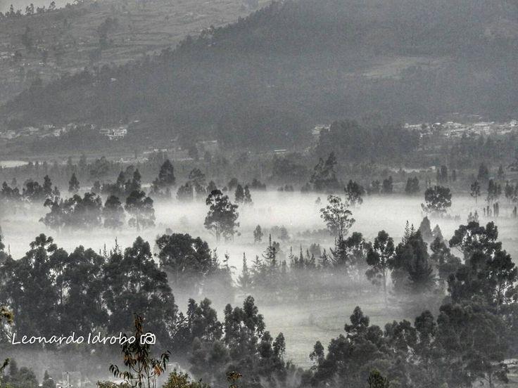 Cuando los bosques también hablan... #Bosque del #LagoSanPablo en #Otavalo #Imbabura Vive tu mejor #aventura con #Rutaviva#TravelTheWorld  Los mejores #HOTELES DESTINOS y SERVICIOS encuéntralos en http://ift.tt/2nuTUfm @leomochilero #EcuadorNow#ViajaPrimeroEcuador#FeelAgainInEcuador  #Ecuador#FamiliaViajeraEcuador  #allyouneedisecuador #travelblogger #mochileros #natgeotravel#SoClose #LikeNoWhereElse #amor  #AllInOnePlace#instatravel #TraveltheWorld #primerolacomunidad#World_Shots #live…
