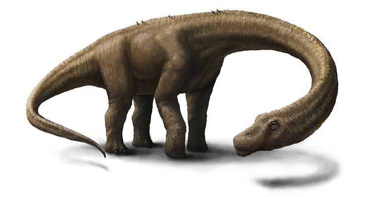 SIZE CHECK The gigantic dinosaur Dreadnoughtus schrani may not have weighed as much as scientists thought. A new analysis of bone volume puts the dino's weight at as little as 22,000 kilograms. ~~ Jennifer Hall