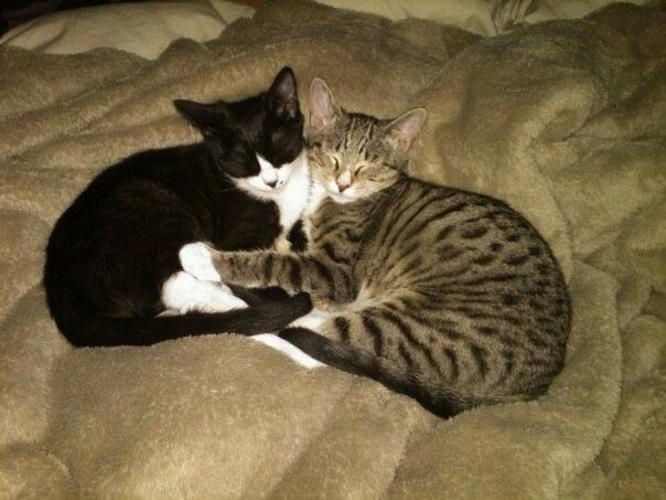 Holly McPherson‎CT Lost Pets Yesterday · Edited · Lost Cat