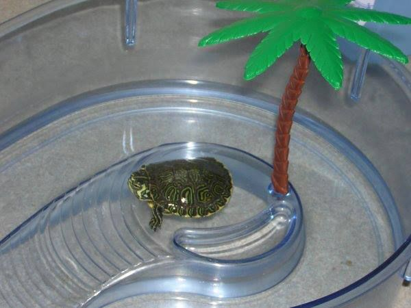 I had this little island for my little turtle guy.  Don't remember his/her name, but he/she had only 3 legs.  I loved that turtle!