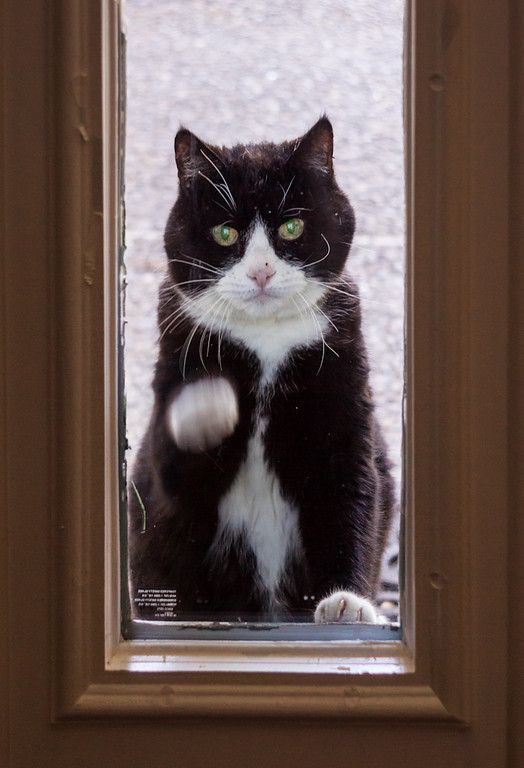 knock knock....your cat is STILL outside!