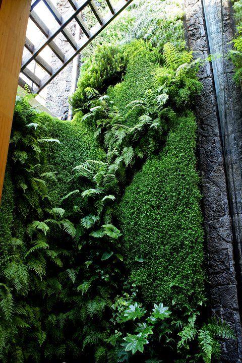 Muro verde hidrop nico en restaurant aqu est coco de for Muros verdes arquitectura