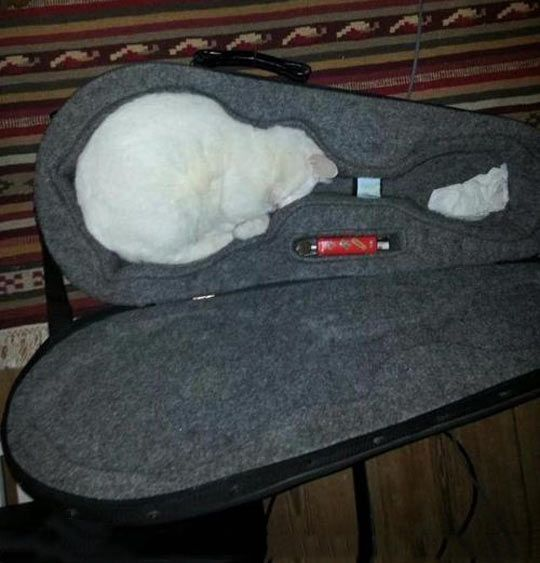 Undeniable proof that cats are liquids…